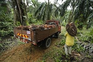 Things are looking up for palm oil stocks